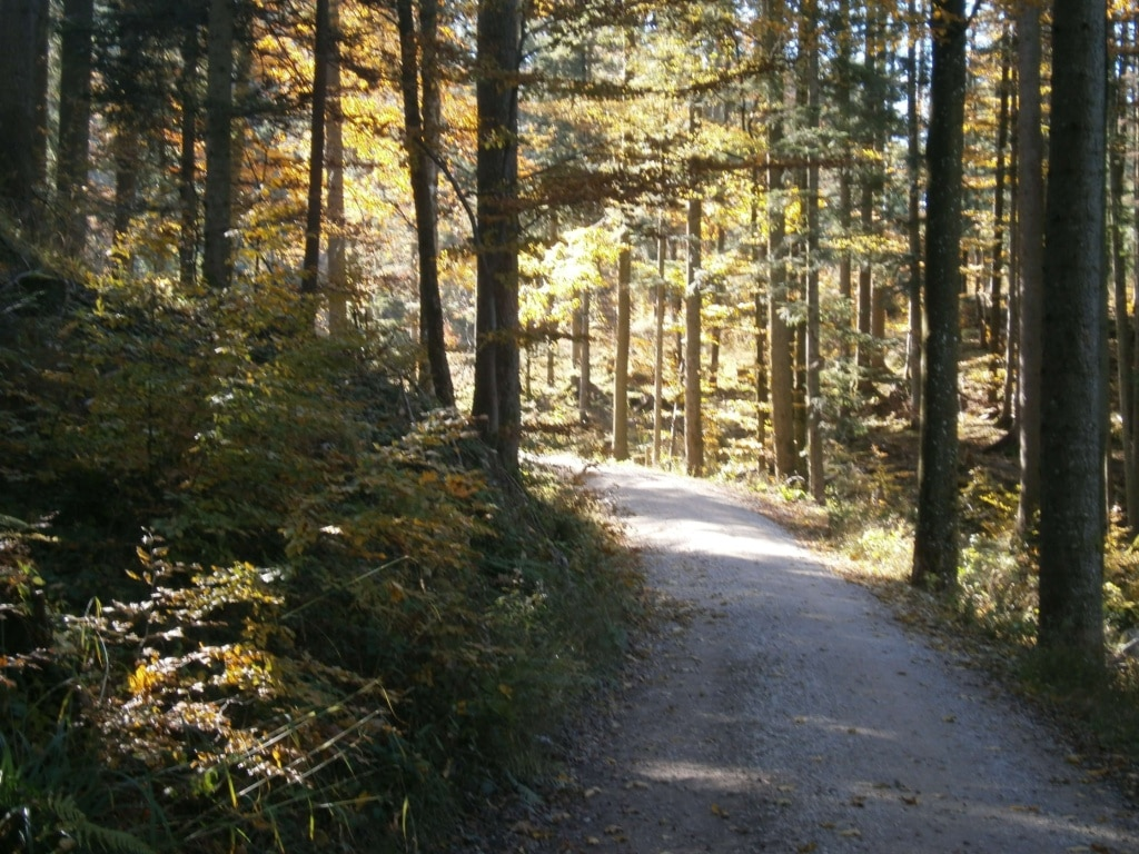 Bild eines Waldweges mit Sonnenstrahlen