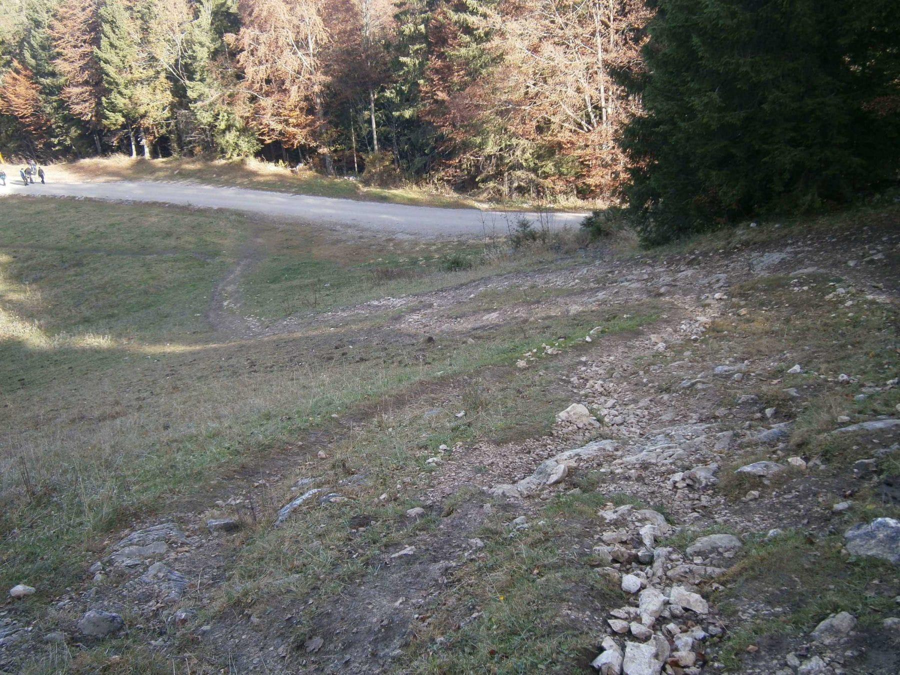weg-zwischen-gori-alm-und-forststrasse